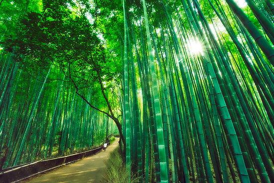 1001fact-bamboo