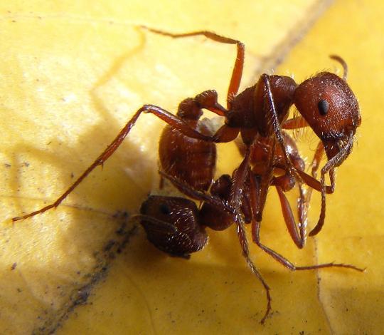 Кот котофеич расскажет про самых опасных муравьёв - Оставь свой след