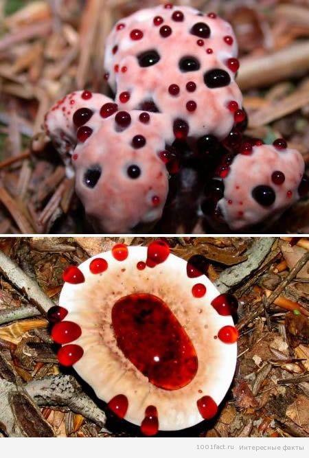 Редкие грибы