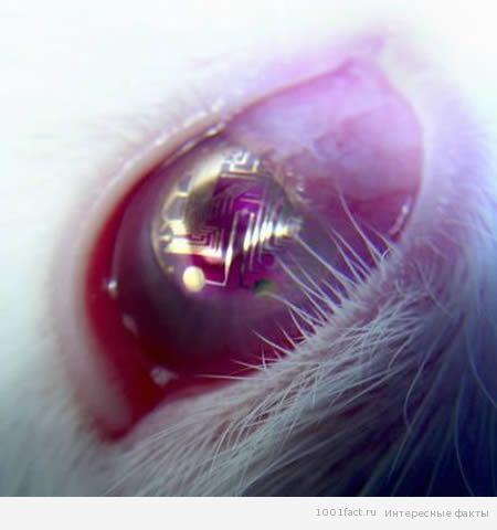 необычные контактные линзы 3