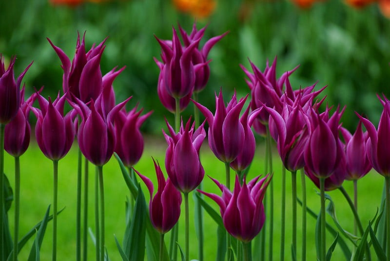 http://1001fact.ru/wp-content/uploads/2011/12/tulips5.jpg