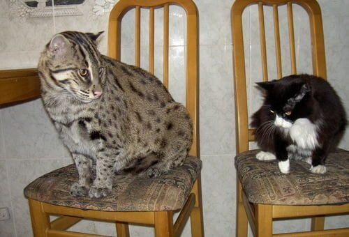 Кошки. Интересные факты