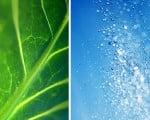 зеленый и синий