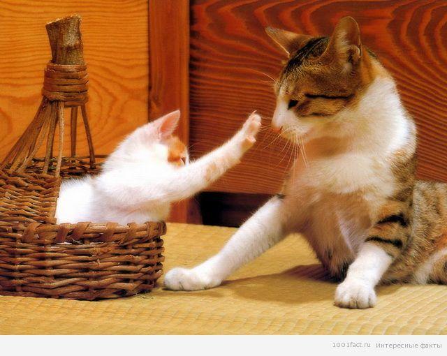 У кошки после бежит слюна у кошки