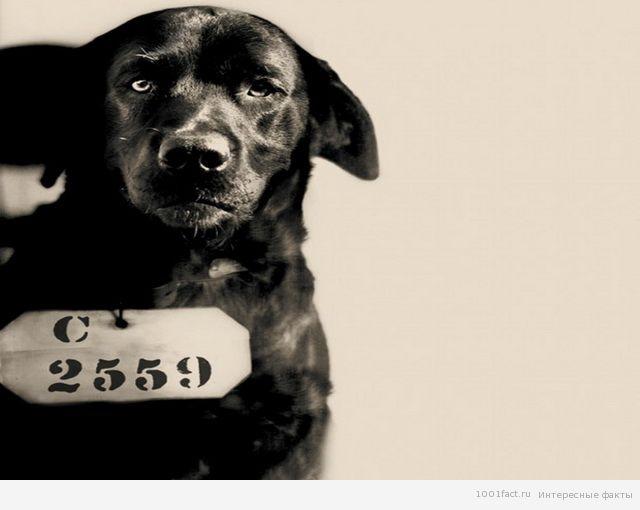 суд над собакой