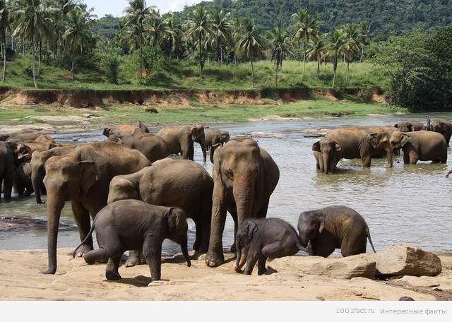 слоны и метеориты