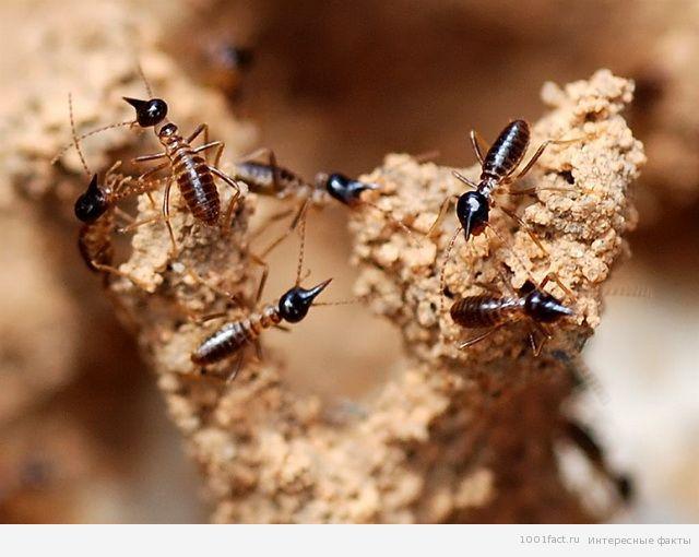 муравьи и суд над ними