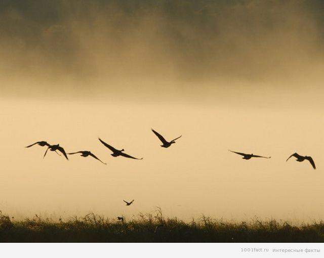 некоторые факты о долине падающих птиц