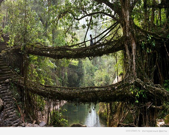мост Черапунджи