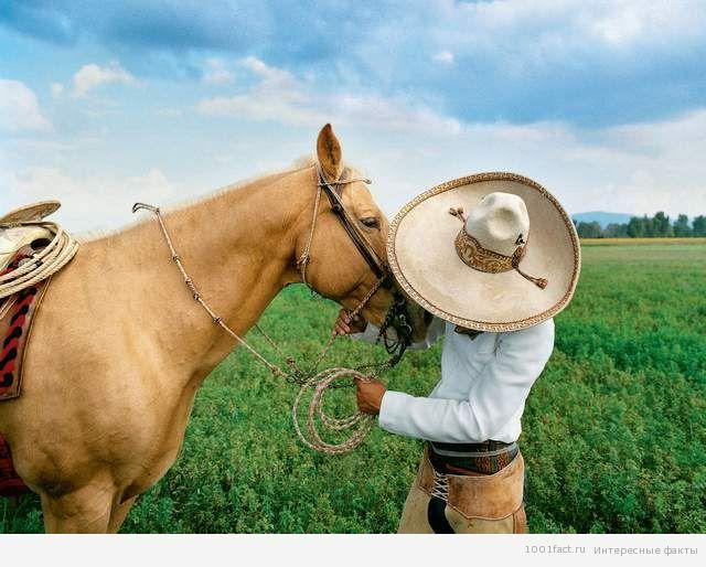 из истории соломенной шляпы