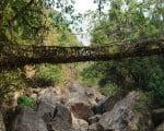 факты о мосте Черапунджи