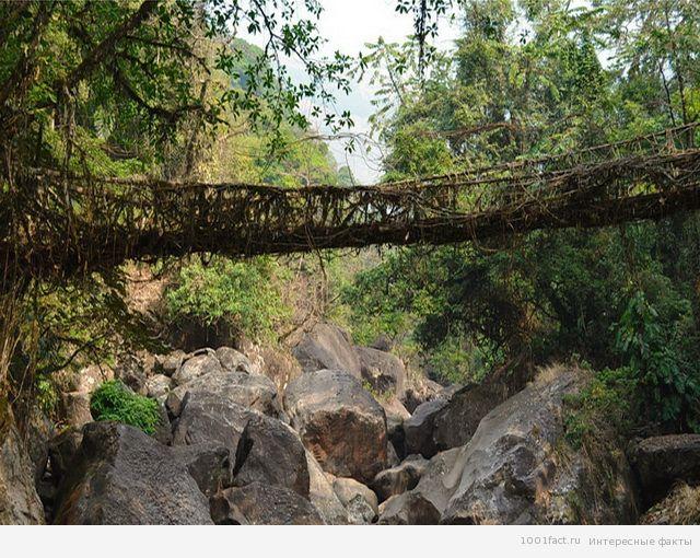 сооружения_мост Черапунджи