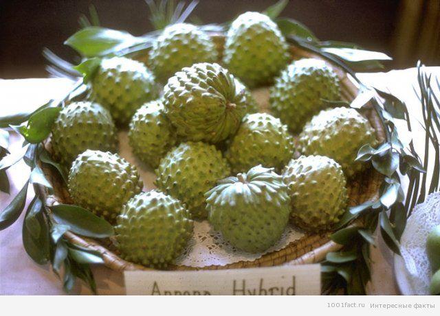 экзотический фрукт_черимойя