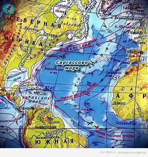 Саргассово море одно из наиболее