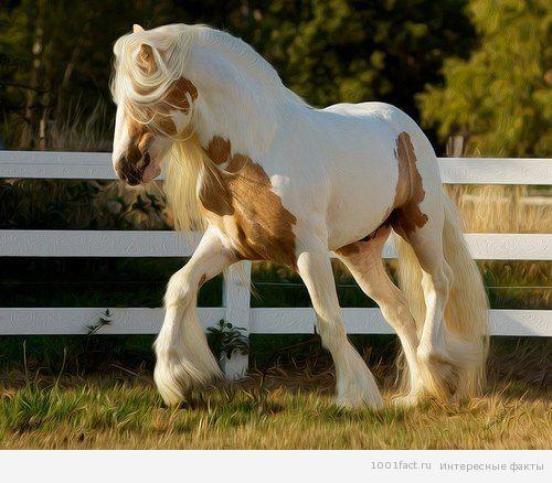 факты_лошадь
