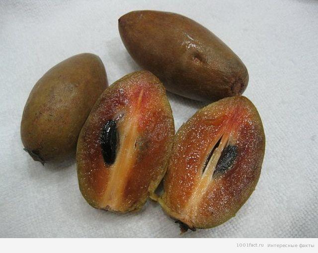 фрукты_саподилла