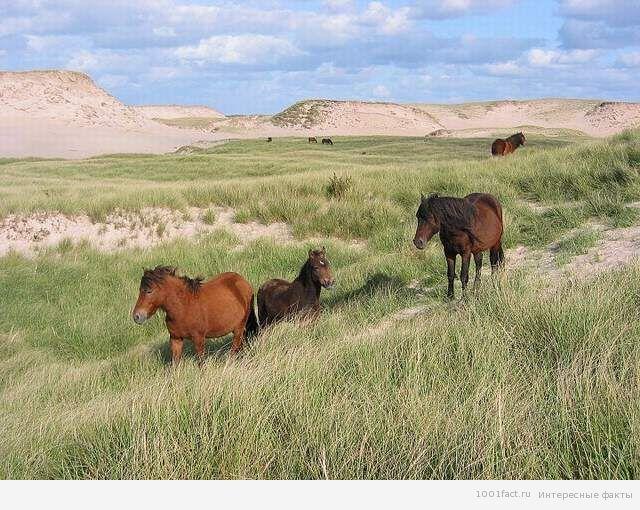 лошади на острове Сейбл