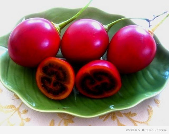 экзотические фрукты_тамарилло