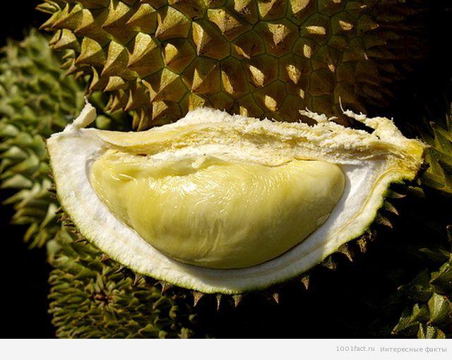 необычный фрукт дуриан