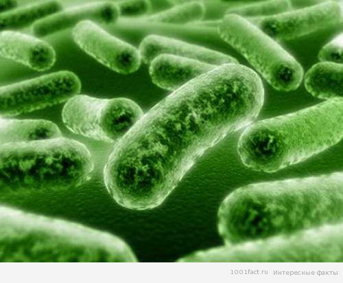 микробы и вирусы
