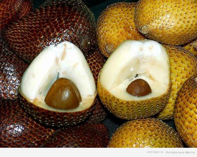 экзотические фрукты_салак