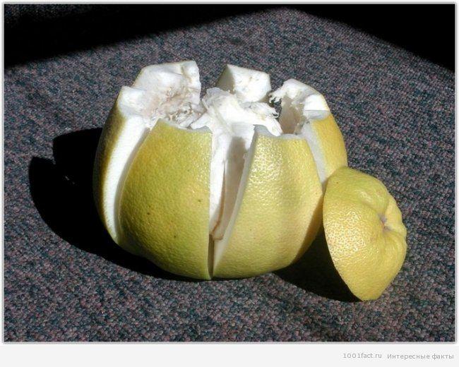 о помело_фрукты