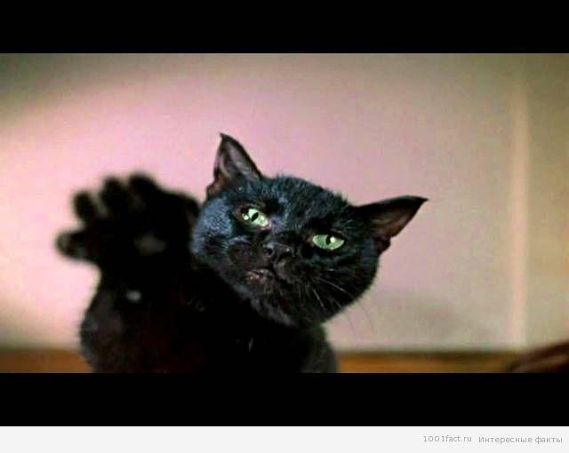 черная кошка_ символ комедии Гайдая