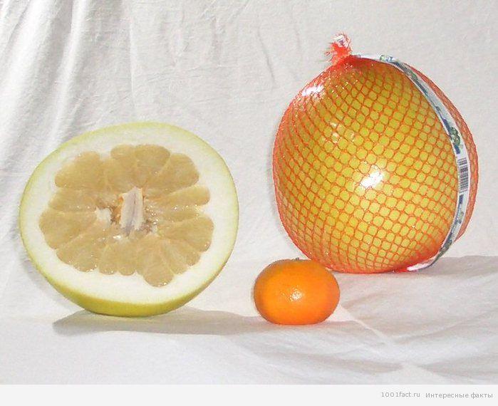 о фрукте помело