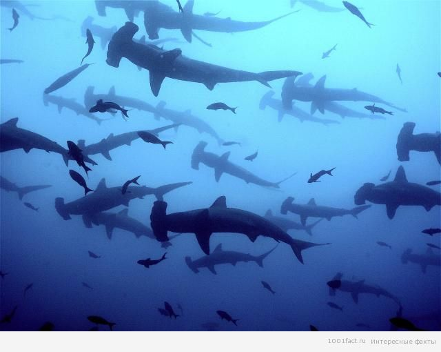 многообразие животного мира на острове Дарвин