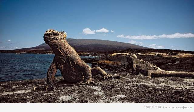 черепахи на острове