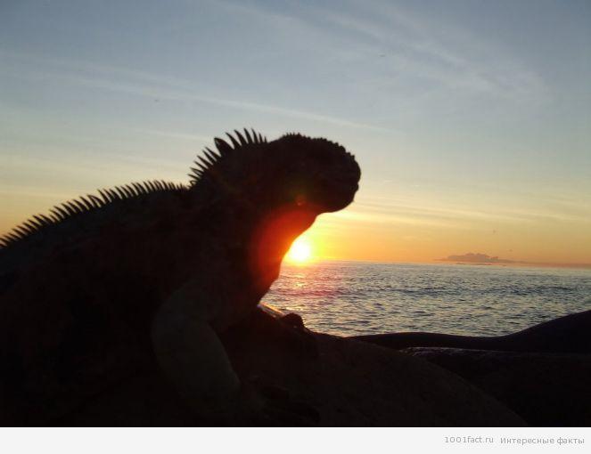 животный мир острова Дарвин