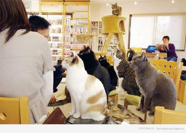 """""""кошачье кафе"""" в Токио"""