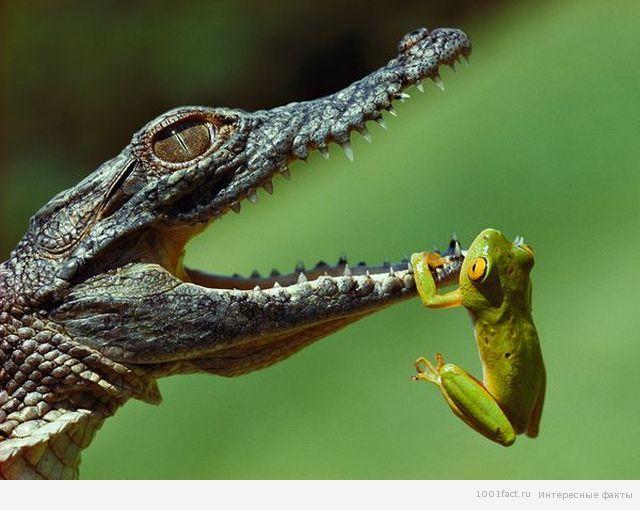 природа Танганьики