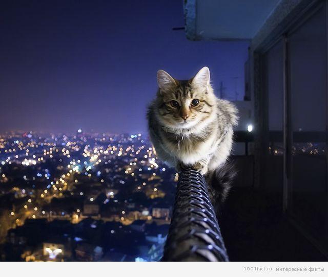 факты о кошачьей интуиции