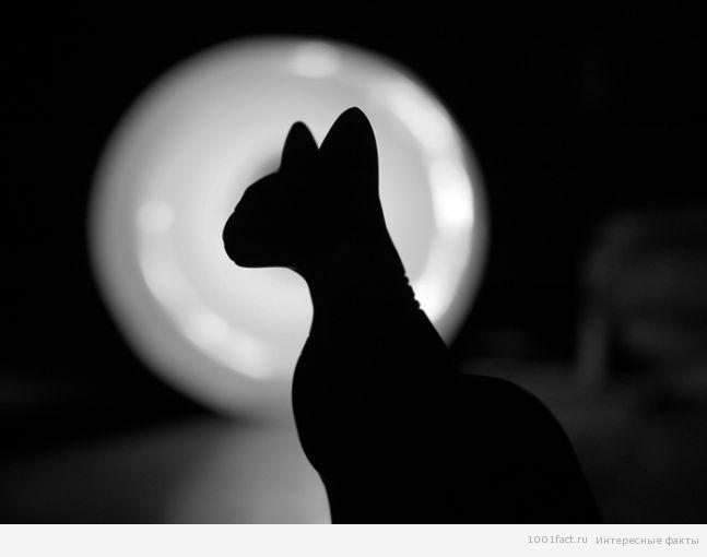 черный кот_символ анархистов