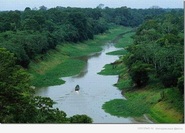 про реку Амазонка