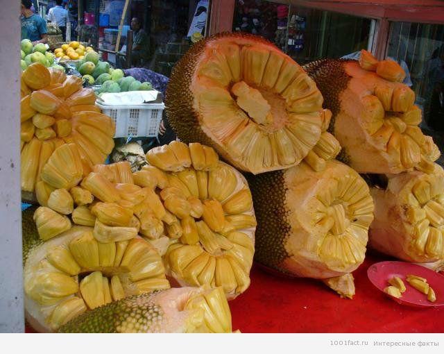 про полезность джекфрута