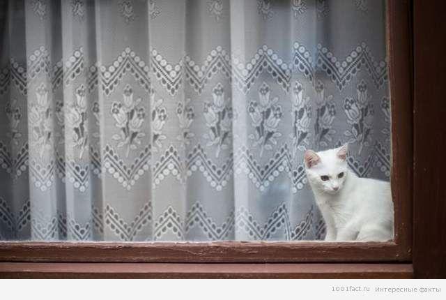 факты_кошка