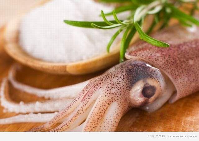 кальмар_морепродукты