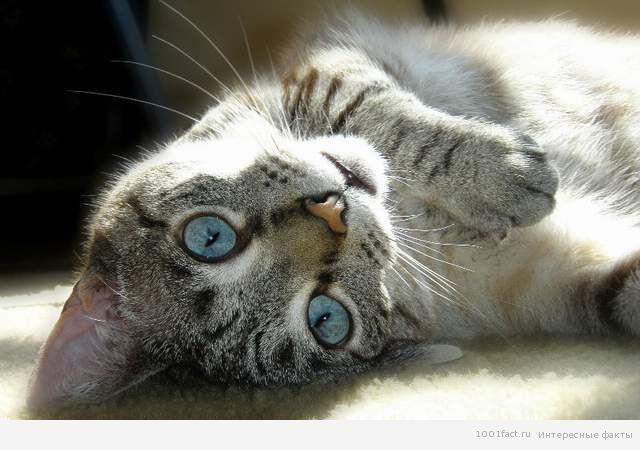 животные_кошачья интуиция