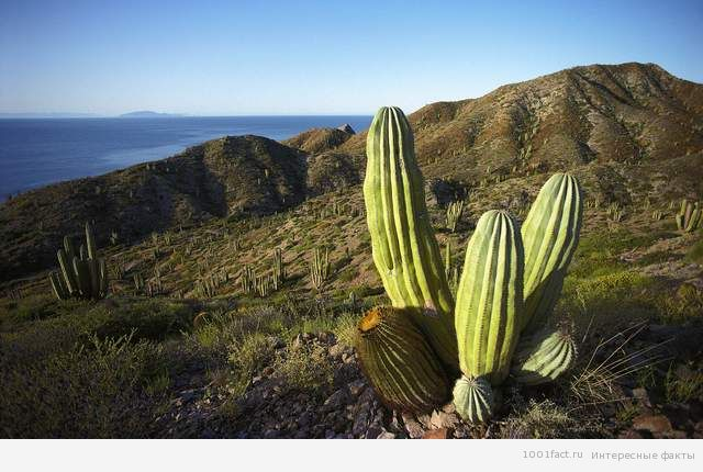 природа_прерия_Мексика