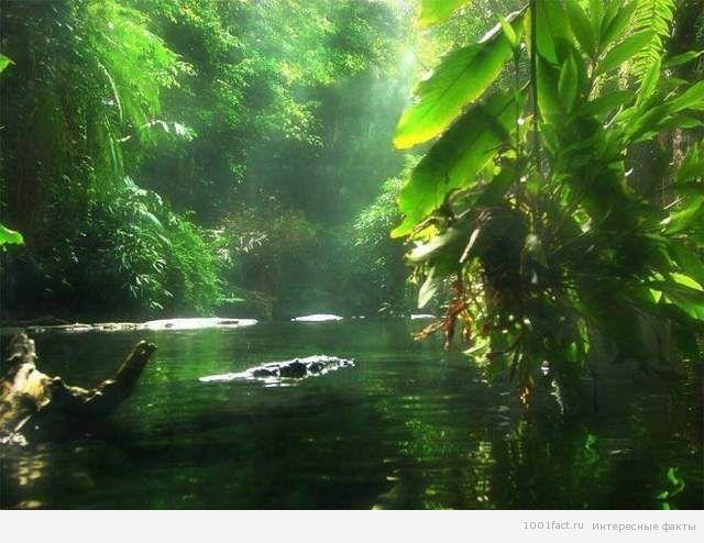 лес вокруг реки Амазонка