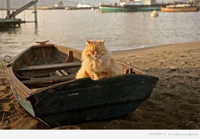 кошки_дорога домой