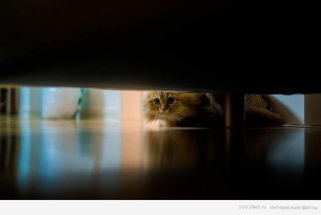 кошка под диваном