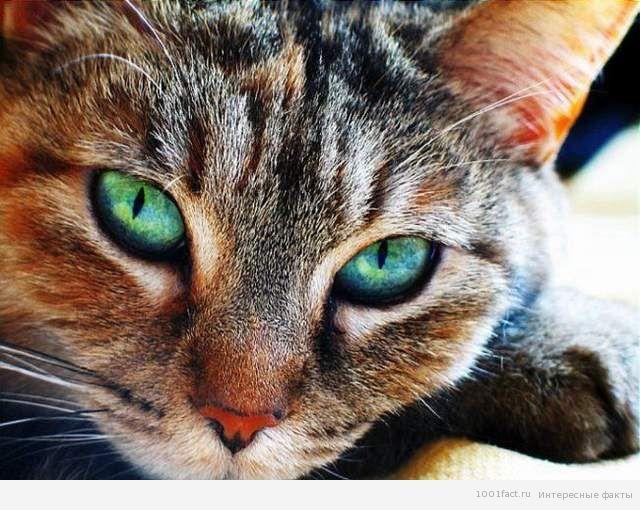 интуиция кошек
