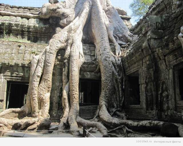 Та Прум_древний храм