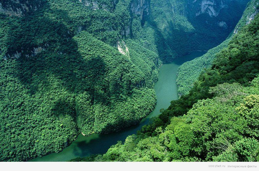 о каньоне Сумидеро в Мексике