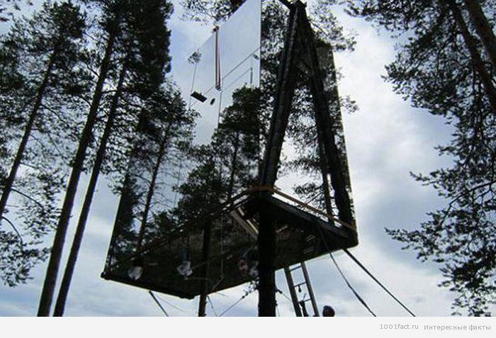 про невидимый отель в лесу
