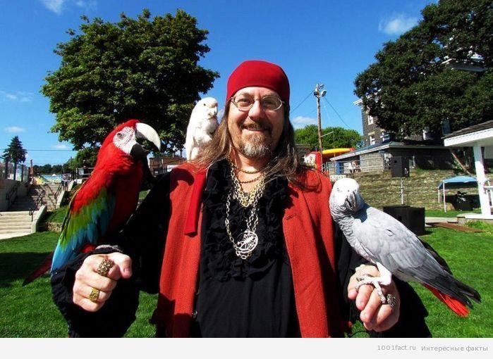 пиратские попугаи