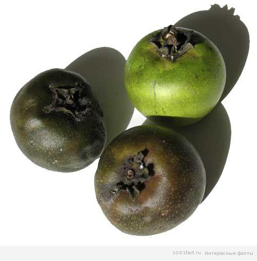 плоды черной сапоты